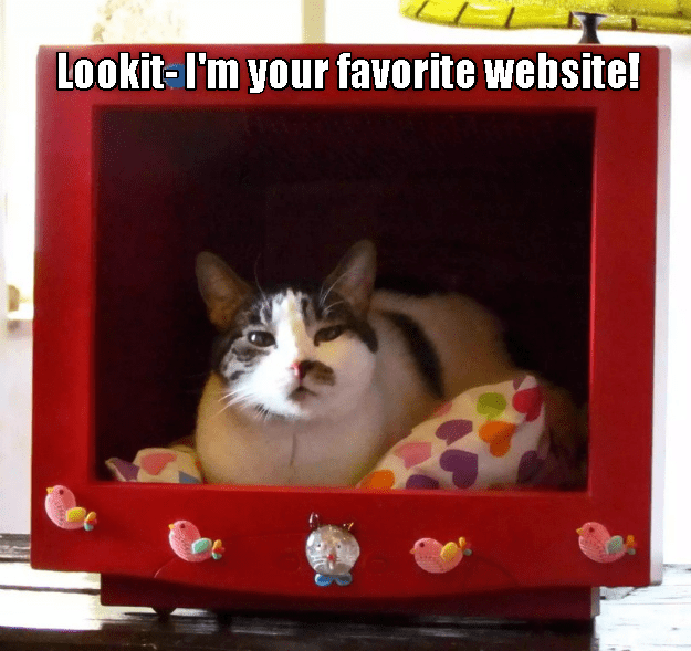 Lookit- I'm your favorite website! | cute cat sitting inside a hollowed out computer screen monitor