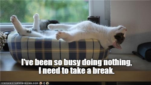 I've been so busy doing nothing, I need to take a break. | funny pic of a cat lying on its back