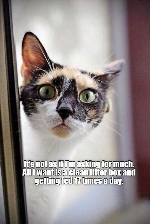 It's not as if I'm asking tor much. All I want is a clean litter box and getting fed 17 times a day.