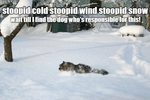 stupid cold stupid wind stupid snow wait till I find the dog who's responsible for this | cat dredging through deep snow