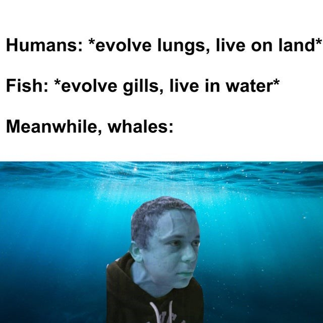 Water - Humans: *evolve lungs, live on land* Fish: *evolve gills, live in water* Meanwhile, whales: