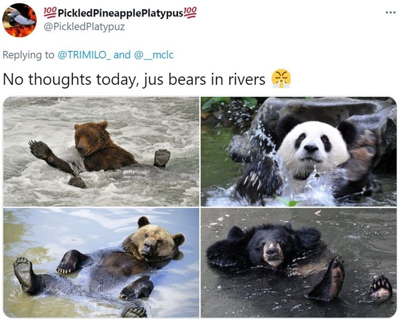Water - 100 PickledPineapplePlatypus!00 @PickledPlatypuz ... Replying to @TRIMILO_ and @_mclc No thoughts today, jus bears in rivers gettyiages