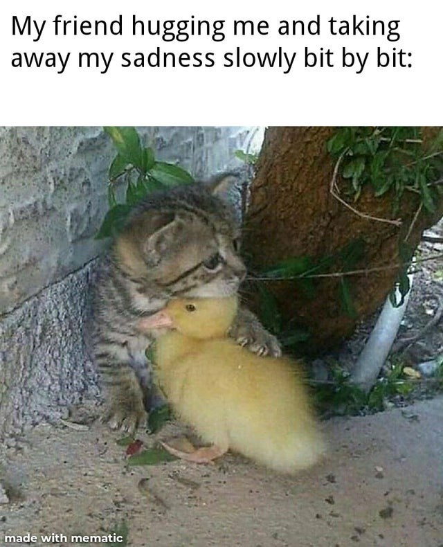 Felidae - My friend hugging me and taking away my sadness slowly bit by bit: made with mematic