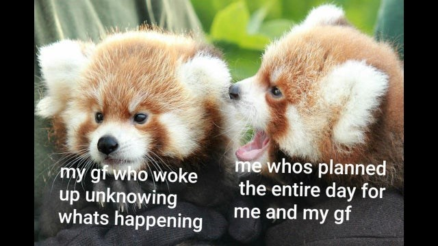 Red panda - my gf who woke up unknowing whats happening me whos planned the entire day for me and my gf