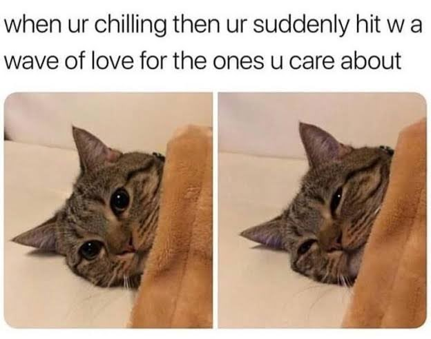 Cat - when ur chilling then ur suddenly hit w a wave of love for the ones u care about