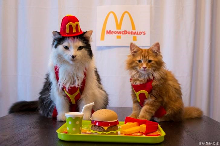 mcdonalds cute cats jobs