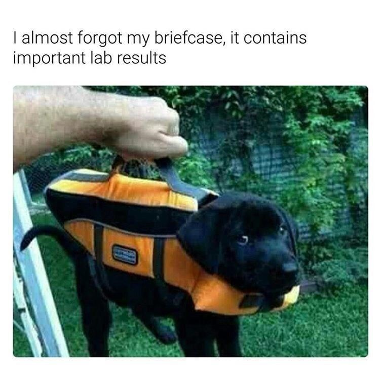 Dog - I almost forgot my briefcase, it contains important lab results