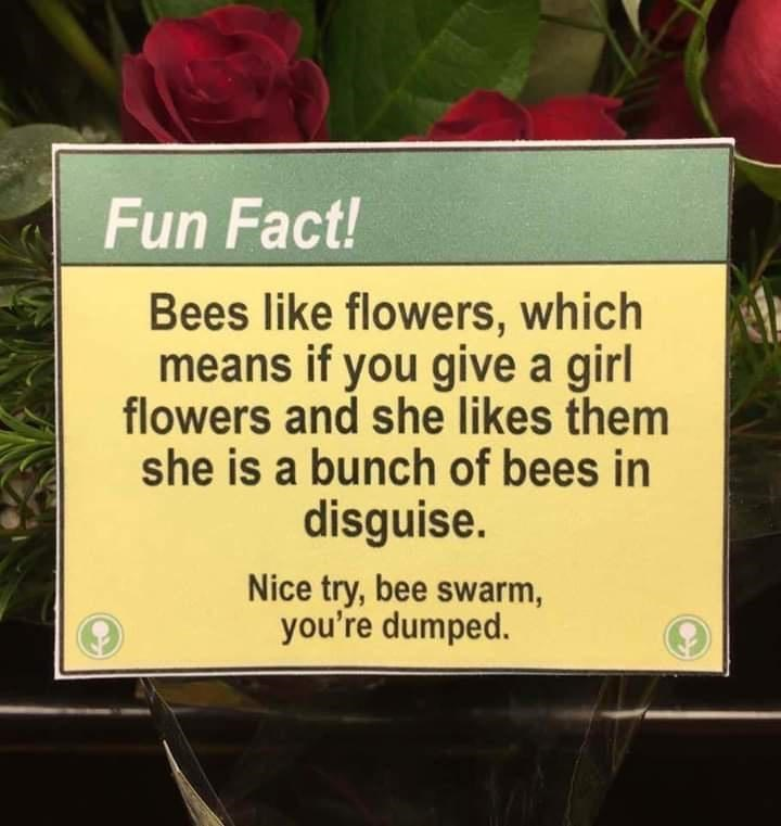 Plant - Fun Fact! Bees like flowers, which means if you give a girl flowers and she likes them she is a bunch of bees in disguise. Nice try, bee swarm, you're dumped.