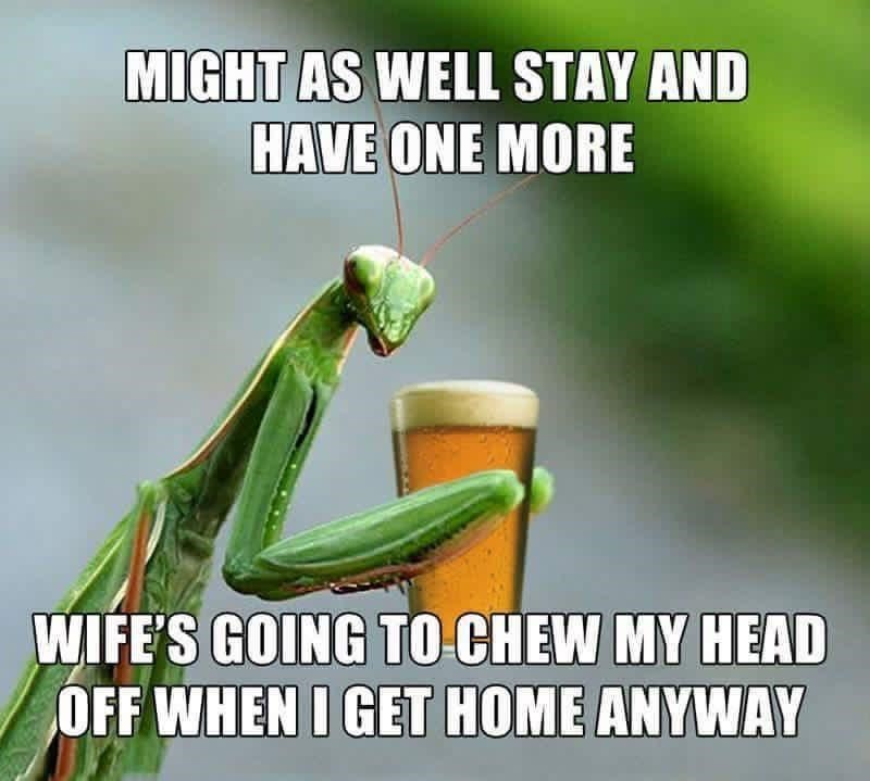 Nature - MIGHT AS WELL STAY AND HAVE ONE MORE WIFE'S GOING TO CHEW MY HEAD OFF WHEN I GET HOME ANYWAY
