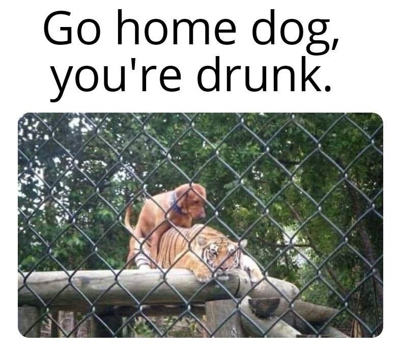 Vertebrate - Go home dog, you're drunk.