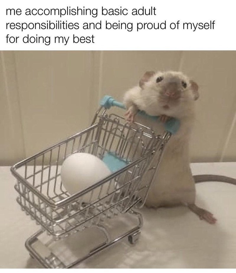Vertebrate - me accomplishing basic adult responsibilities and being proud of myself for doing my best