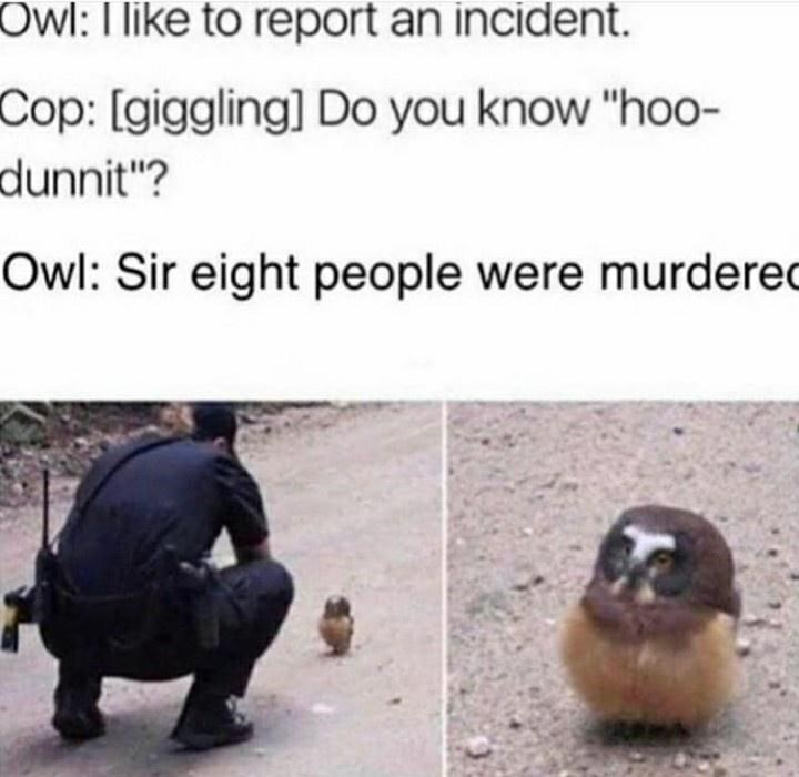 """Bird - Owl: I like to report an incident. Cop: [giggling] Do you know """"ho0- dunnit""""? Owl: Sir eight people were murdered"""