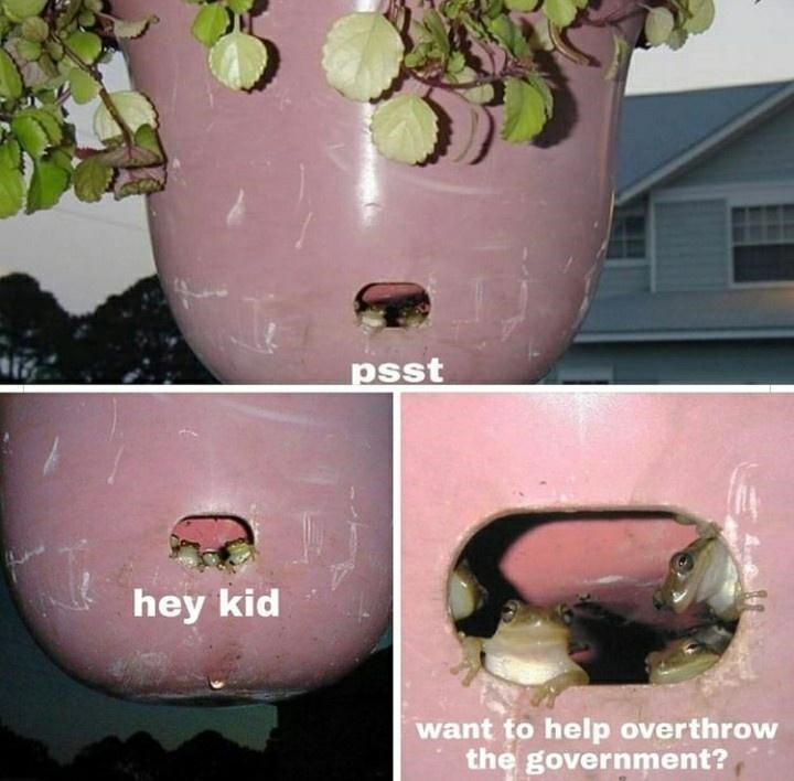 Plant - psst hey kid want to help overthrow the government?
