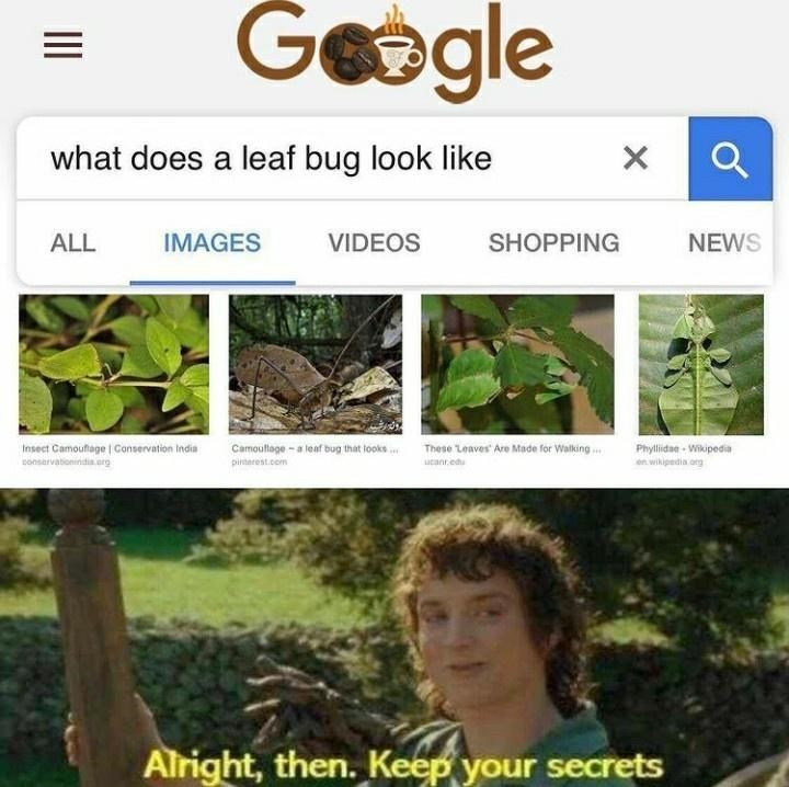 Plant - Gogle what does a leaf bug look like ALL IMAGES VIDEOS SHOPPING NEWS Insect Camouflage   Conservation India Phyllidae - Wikipedia en wikipedia org Camoullage - a leaf bug that looks . These Leaves Are Made for Walking consarvationindia.org pinterest.com ucanr.edu Alright, then. Keep your secrets