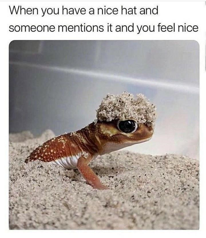 Reptile - When you have a nice hat and someone mentions it and you feel nice