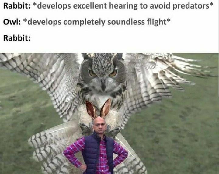 Nature - Rabbit: *develops excellent hearing to avoid predators* Owl: *develops completely soundless flight* Rabbit: