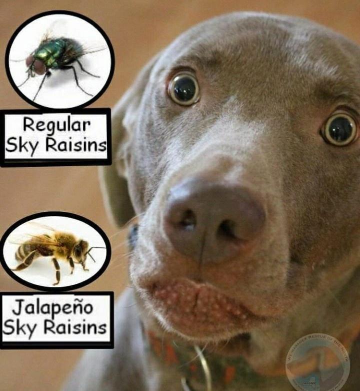 Nose - Regular Sky Raisins Jalapeño Sky Raisins BESCUE THE