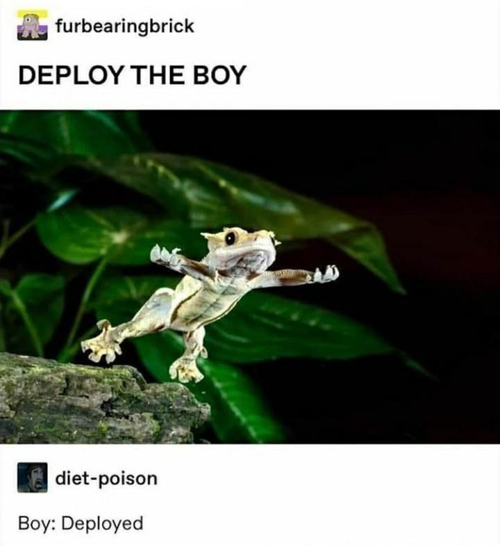 Plant - furbearingbrick DEPLOY THE BOY diet-poison Boy: Deployed