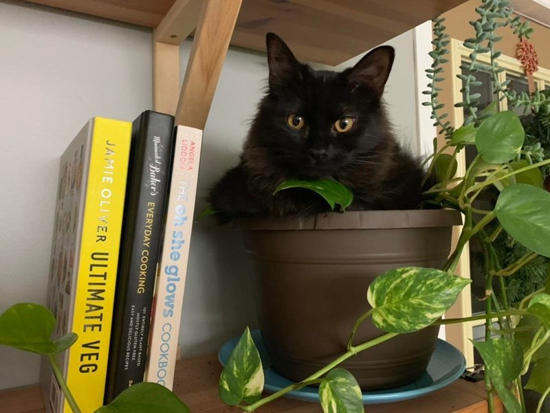 Cat - ANGELA LIDDON THE Oh she glows COOKBO Matnalst Baker's EVERYDAY COOKING 101 ENTIRELY PLANT BASED MOSTLY GLUTEN FREE DA EASY AND DELICIOUS RECIPES JAMIE OLIVER ULTIMATE VEG