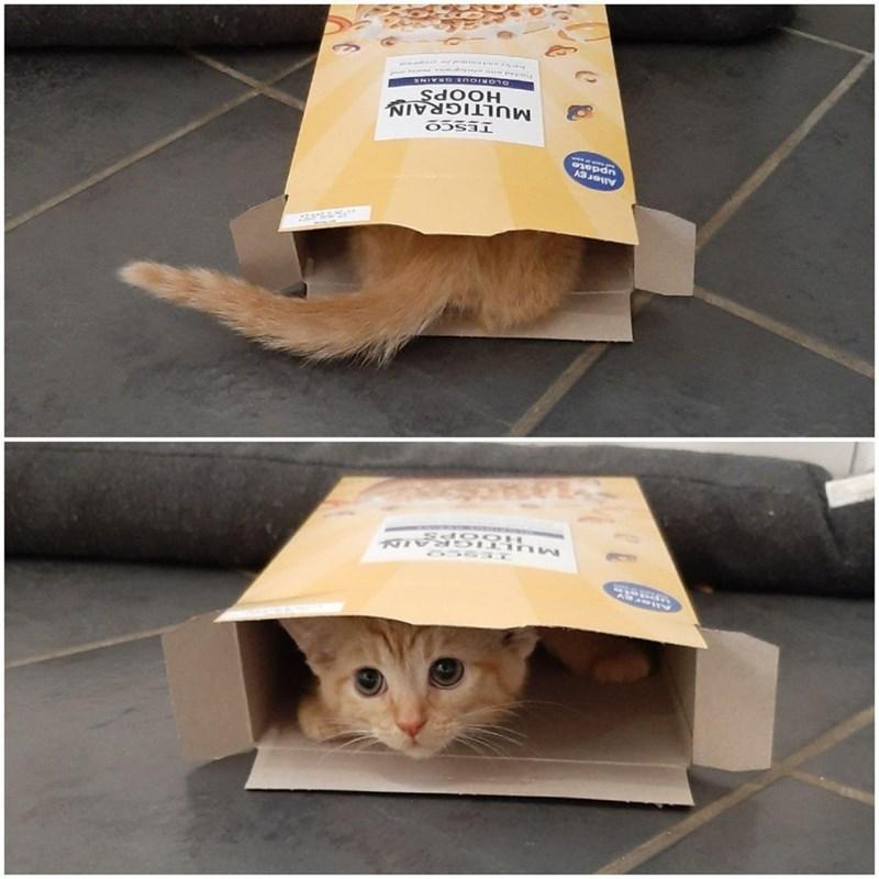 Cat - TESC O MULT IGRAND Sdo OH Allergy update MULTIGRAIN HOOPS