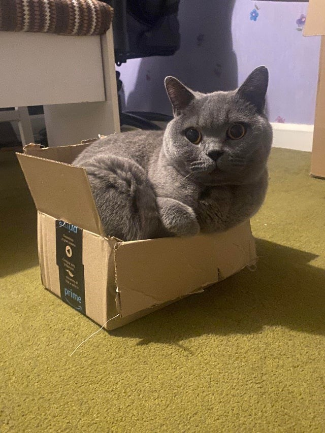 Cat - prime