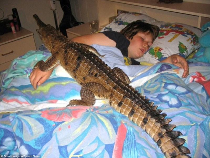 Crocodile - © Grant Hodgson/Splash News