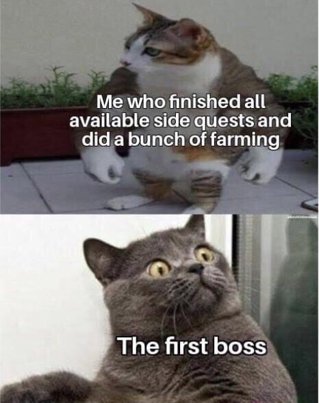 Cat - Me who finished all available side quests and did a bunch of farming The first boss
