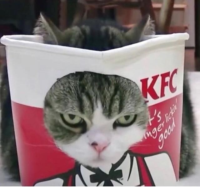 Cat - KFC t's ger lickin good