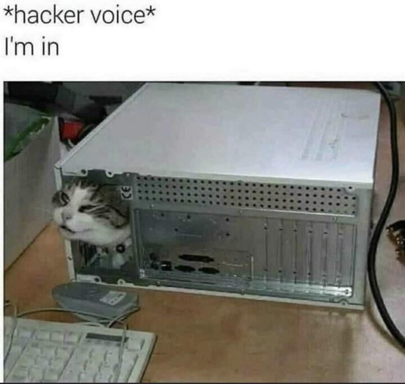 Cat - *hacker voice* I'm in