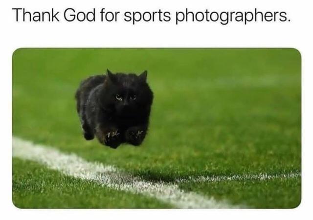 Dog - Thank God for sports photographers.