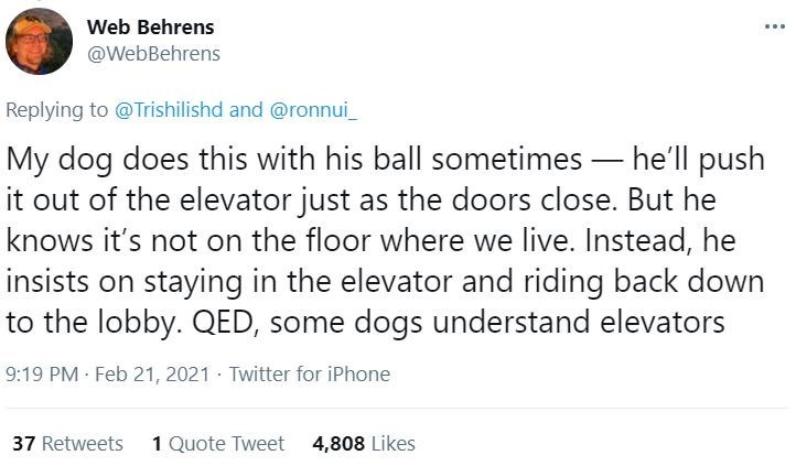 Font - Web Behrens ... @WebBehrens Replying to @Trishilishd and @ronnui_ My dog does this with his ball sometimes – he'll push it out of the elevator just as the doors close. But he knows it's not on the floor where we live. Instead, he insists on staying in the elevator and riding back down to the lobby. QED, some dogs understand elevators 9:19 PM Feb 21, 2021 · Twitter for iPhone 37 Retweets 1 Quote Tweet 4,808 Likes