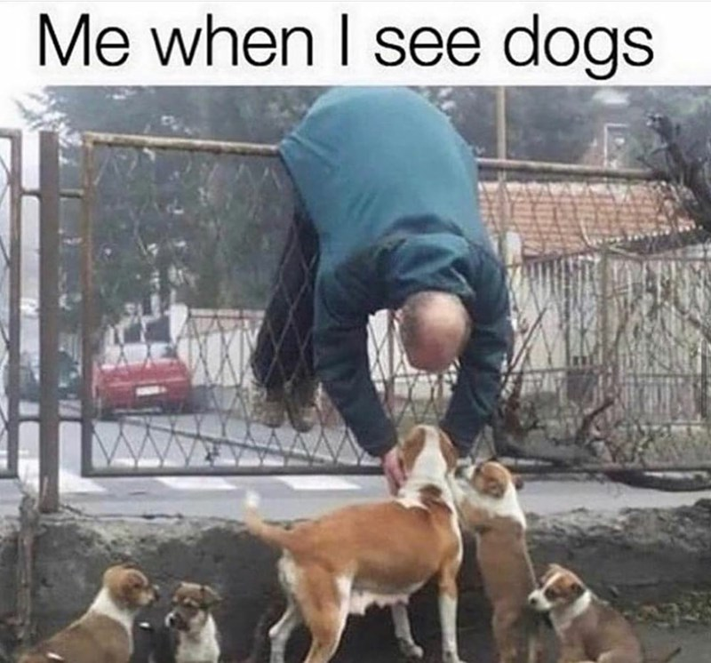 Dog - Me when I see dogs
