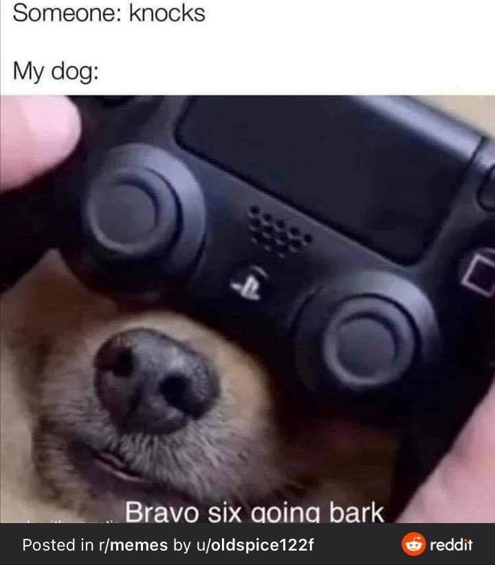 Dog - Someone: knocks My dog: Bravo six going bark Posted in r/memes by u/oldspice122f O reddit