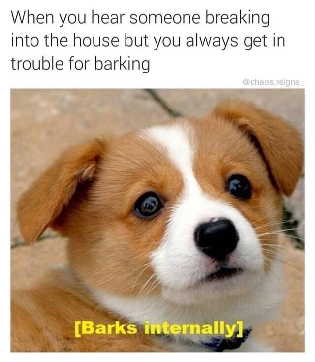 Dog - When you hear someone breaking into the house but you always get in trouble for barking @chaos.reigns, [Barks internally]