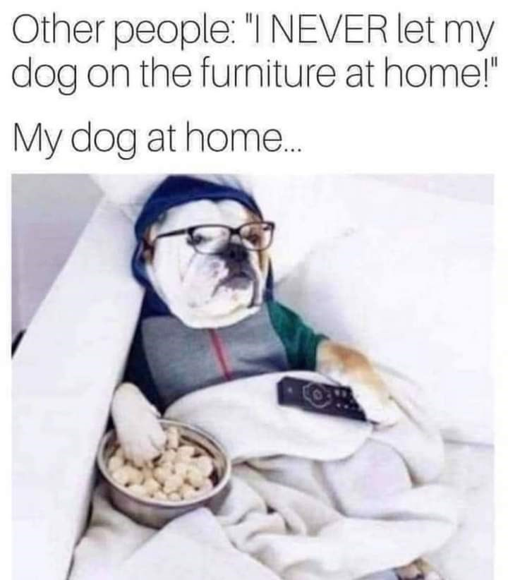"""Glasses - Other people: """"I NEVER let my dog on the furniture at home!"""" My dog at home."""