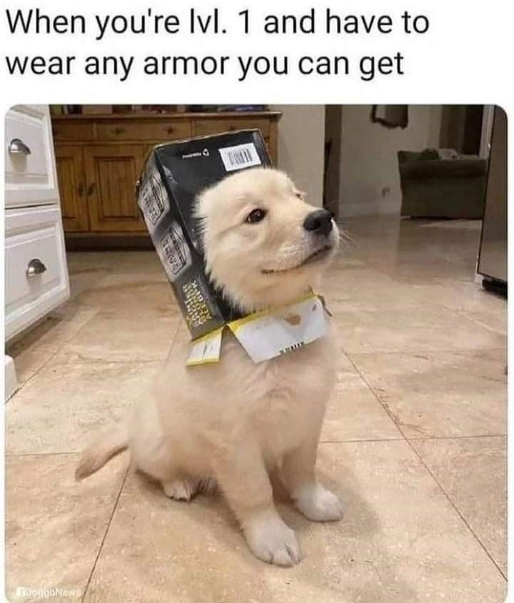 Dog - When you're Ivl. 1 and have to wear any armor you can get