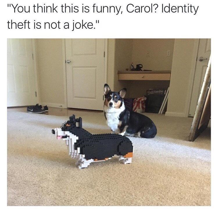 """Dog - """"You think this is funny, Carol? Identity theft is not a joke."""" AarRtombie"""