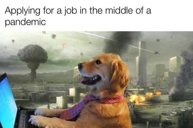 Dog - Applying for a job in the middle of a pandemic
