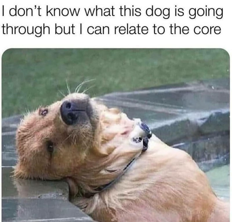 Dog - I don't know what this dog is going through but I can relate to the core
