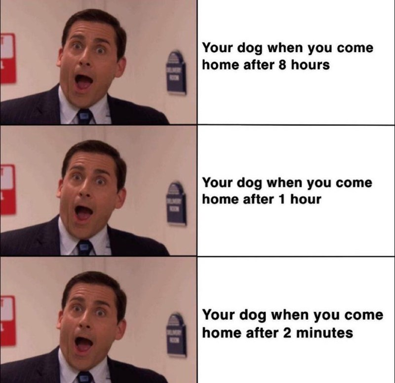 Forehead - Your dog when you come home after 8 hours LMR 808 Your dog when you come home after 1 hour 80N Your dog when you come home after 2 minutes BUMR 8ON