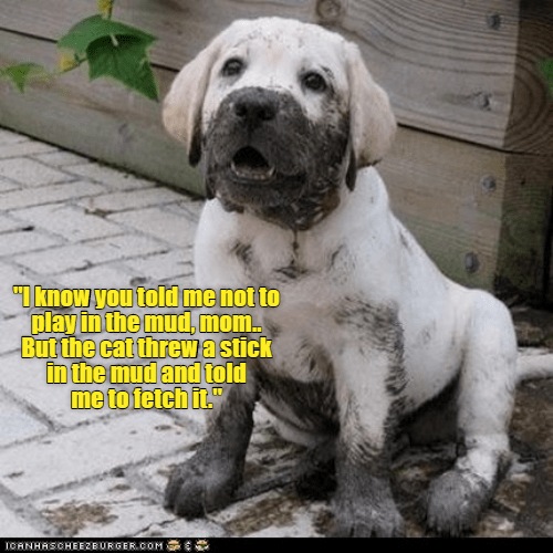 I know you told me not to play in the mud mom but the cat threw a stick in the mud and told me to fetch it | cute puppy covered in mud