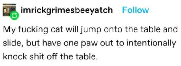 Sky - imrickgrimesbeeyatch Follow My fucking cat will jump onto the table and slide, but have one paw out to intentionally knock shit off the table.
