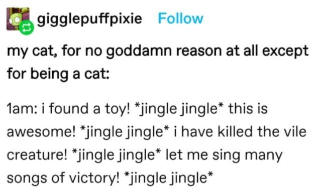 Rectangle - gigglepuffpixie Follow my cat, for no goddamn reason at all except for being a cat: lam: i found a toy! *jingle jingle* this is awesome! *jingle jingle* i have killed the vile creature! *jingle jingle* let me sing many songs of victory! *jingle jingle*
