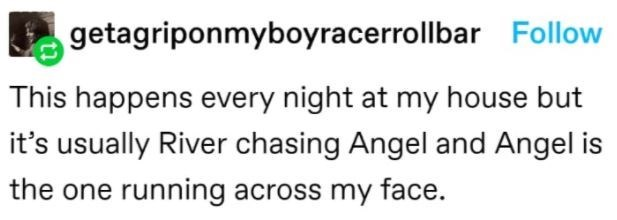 Mammal - getagriponmyboyracerrollbar Follow This happens every night at my house but it's usually River chasing Angel and Angel is the one running across my face.