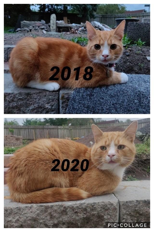 Cat - 2018 2020 PIC COLLAGE