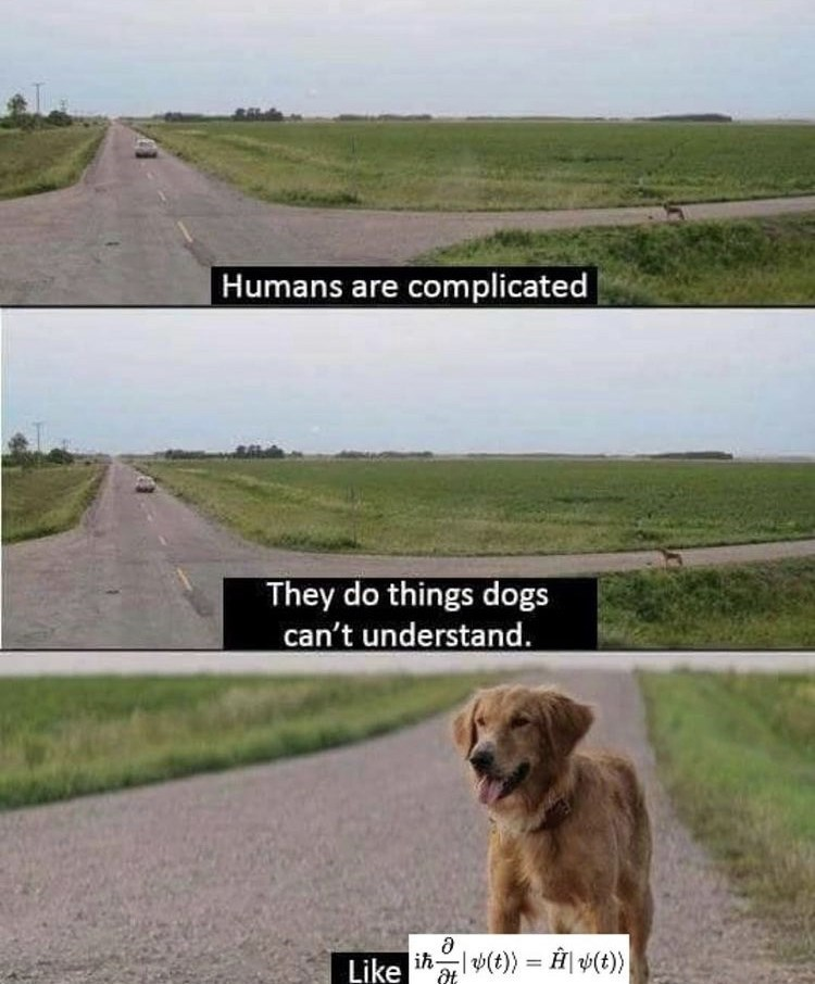 Dog - Humans are complicated They do things dogs can't understand. Like ihal(t) = ÎĤ| #(t}}