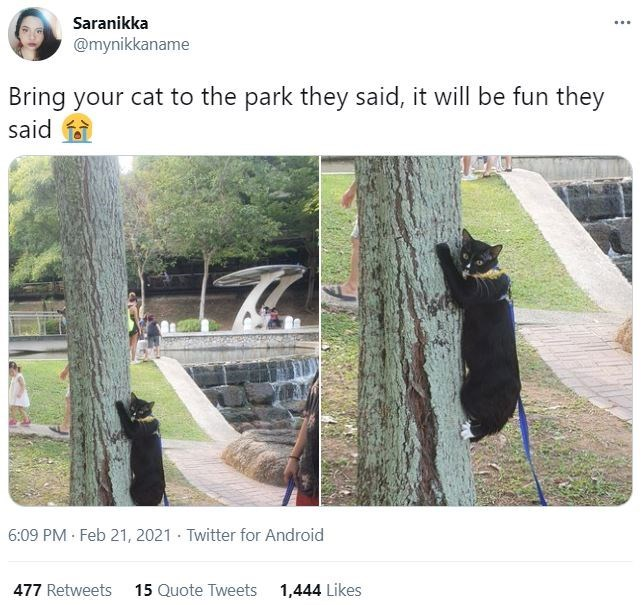 Plant - Saranikka @mynikkaname Bring your cat to the park they said, it will be fun they said 6:09 PM · Feb 21, 2021 · Twitter for Android 477 Retweets 15 Quote Tweets 1,444 Likes