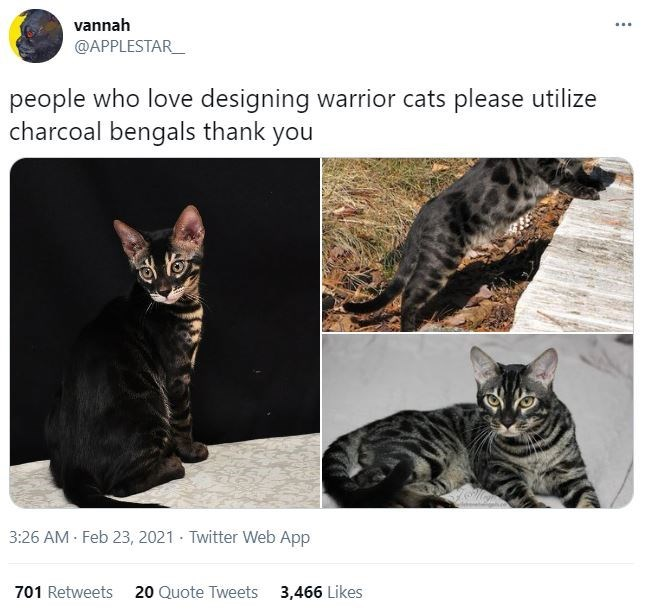 Cat - vannah ... @APPLESTAR_ people who love designing warrior cats please utilize charcoal bengals thank you 3:26 AM - Feb 23, 2021 · Twitter Web App 701 Retweets 20 Quote Tweets 3,466 Likes