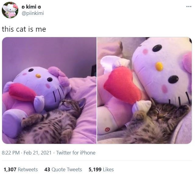 Photograph - a kimi a @piinkimi ... this cat is me 8:22 PM · Feb 21, 2021 - Twitter for iPhone 1,307 Retweets 43 Quote Tweets 5,199 Likes