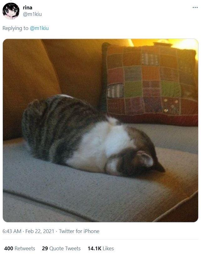Cat - rina ... @m1kiu Replying to @m1kiu 6:43 AM Feb 22, 2021 - Twitter for iPhone 400 Retweets 29 Quote Tweets 14.1K Likes